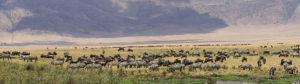 3 days Ngorongoro lake Manyara