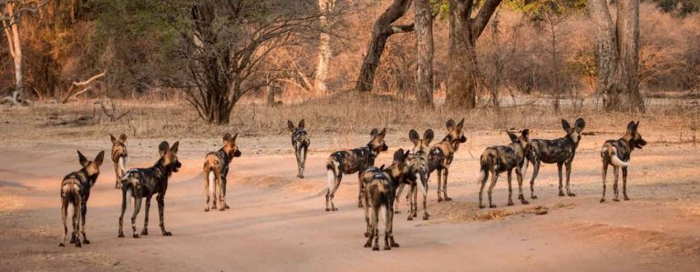 6 Days Selous Game Reserve and Mikumi National Park